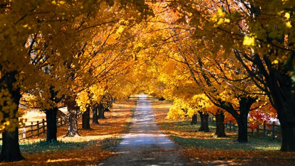 fall_wallpaper_706h