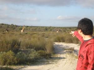 Minwoo spots some giraffe!
