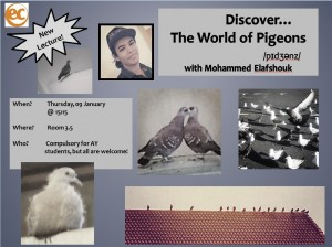 Discover the world of pigeons