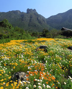 view of kirstenbosch botanical gardens