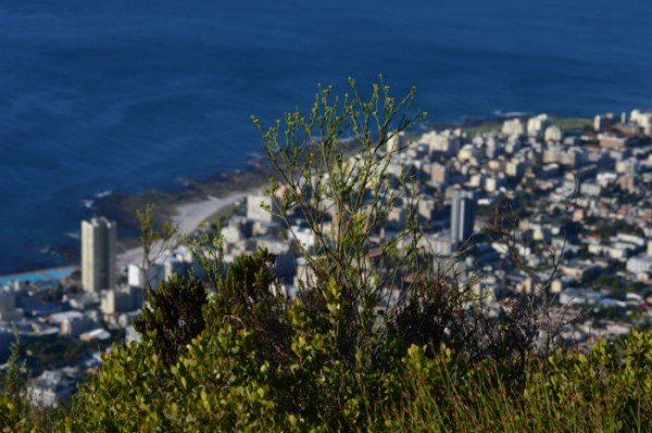From Table Mountain you can see the entire city of Cape Town