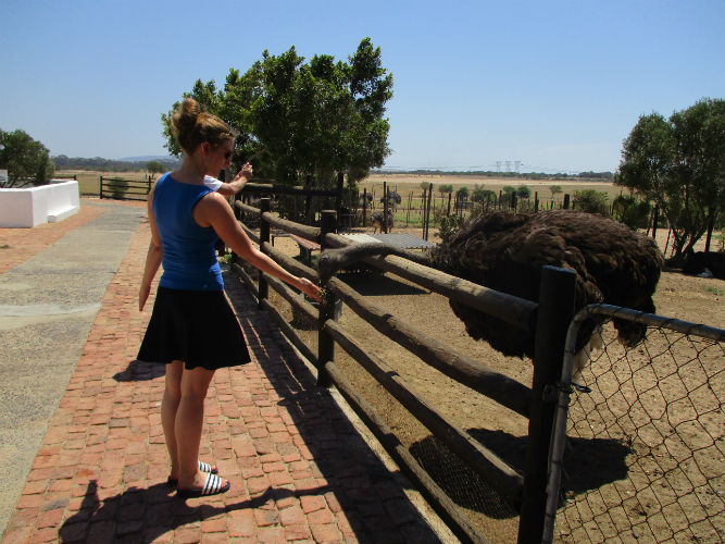 An EC Cape Town student gets over her fear of ostriches