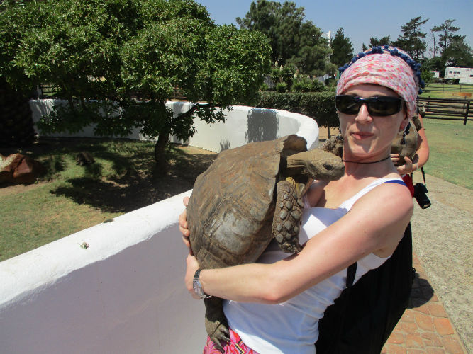 Students at EC Cape Town enjoying their tortoise experience.