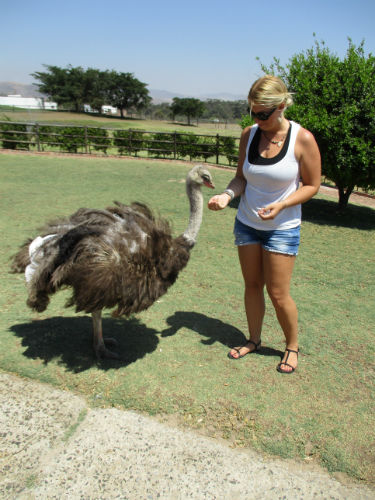 Denise gets the chance to feed an ostrich!