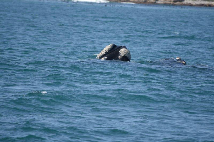 Whale watching happens until the end of November. Join us at EC Cape Town