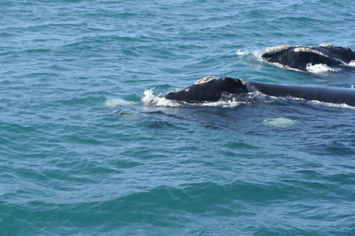 Whale watching is a popular activity @ EC Cape Town