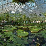 Kew Gardens - Waterlily House