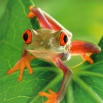 Jlenia's frog