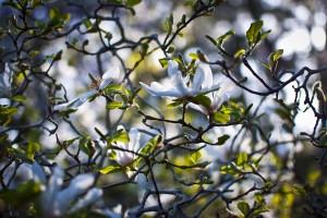 Botanical Gardens_1
