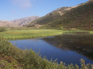 Typical Northern California lagoon and hillsides (photo by Patricia A. Leslie, artist / author)
