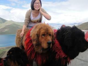 Minfei in Tibet