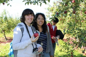alba apple picking