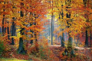woods-1072819_1920-r50