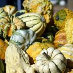 pumpkin-1651967_1920