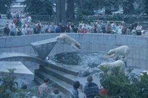 Polar-Bears-1963-CVA-2010-006-1071