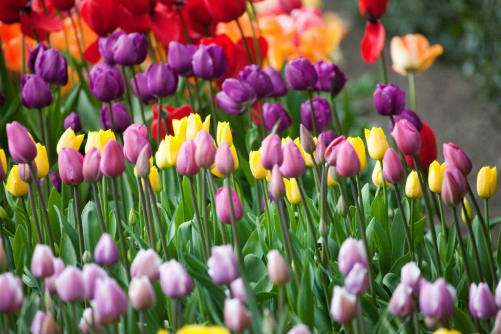 Easter_Sunday_2009_-_Botanic_Gardens-w1000-h1000