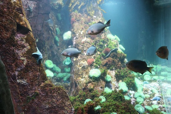 Vancouver Aquarium Admission