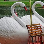 EC Boston Swan Boats with Rachid