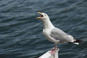 Seagull EC Brighton