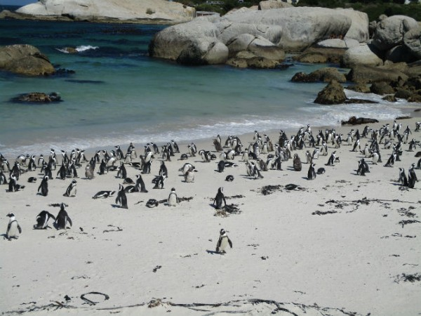 EC Cape Town offers nature lovers lots to see and do.