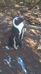 Boulders Beach is a must-see for EC Cape Town students