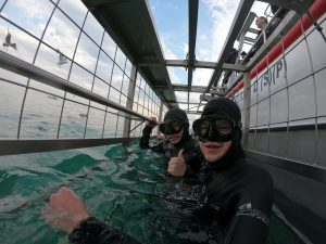 CAE student goes shark cage diving