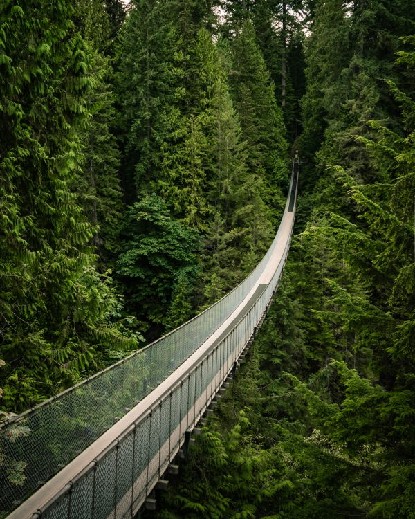 Cap Bridge