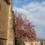 EC Oxford English School enjoying Oxford's Spring