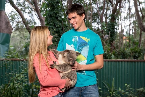 Accarezza un koala