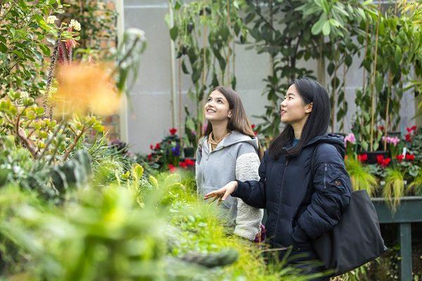 Visita i giardini botanici di Auckland