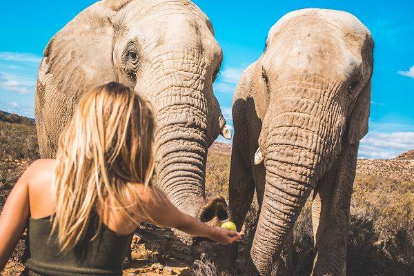 Alimentando Elefantes En Sudáfrica