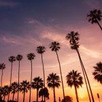 Palmeras De San Diego