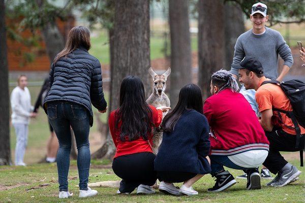 Alumnos Con Canguros En Brisbane