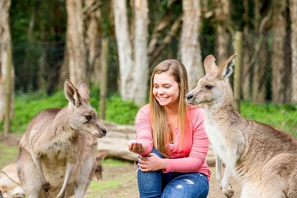 Estudante alimentando os cangurus