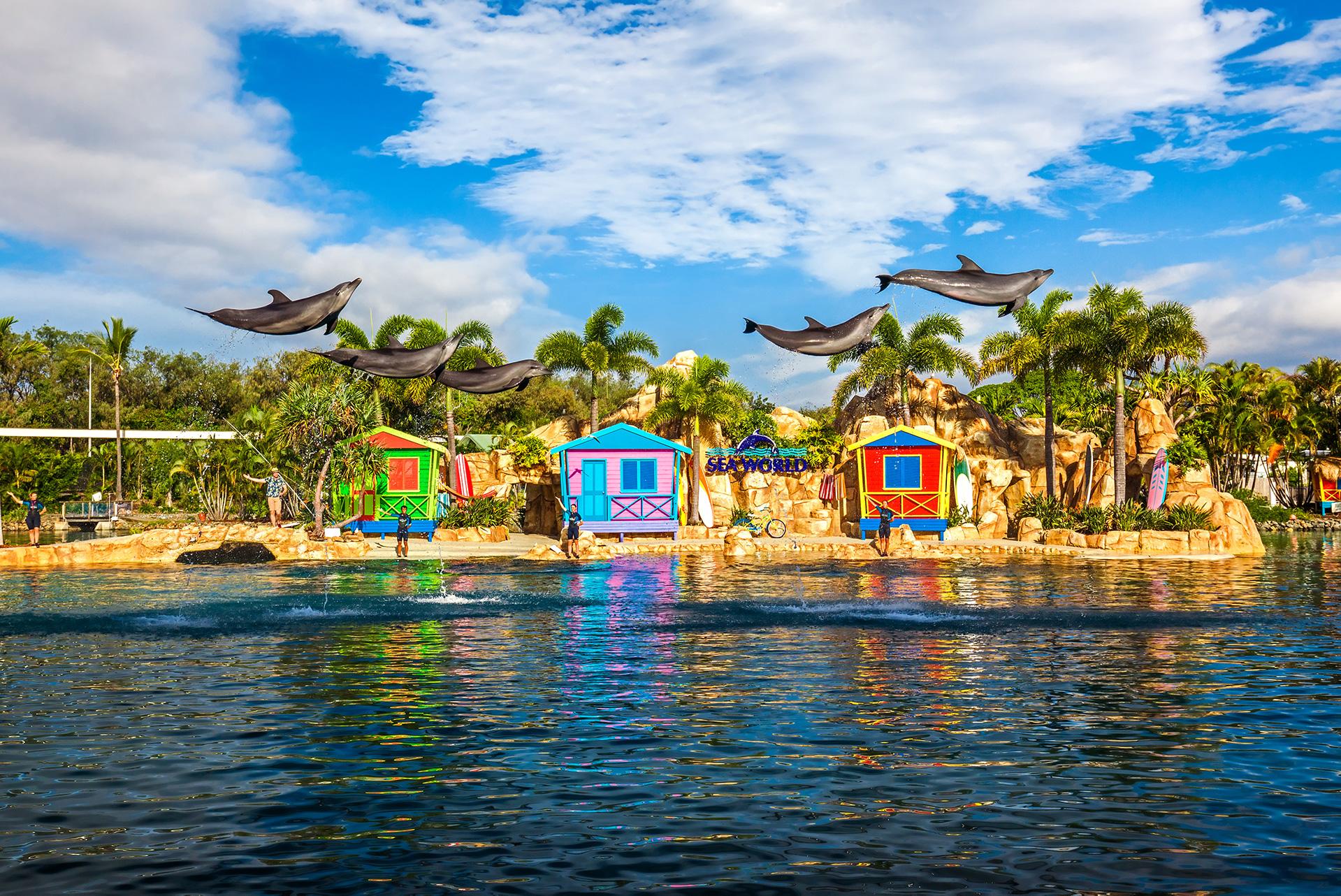 Show de Golfinhos no Sea World, Gold Coast